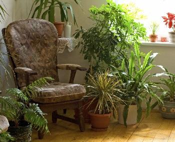 Kucne biljke selidba