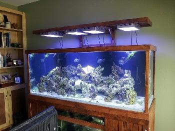 Selidba akvarijuma